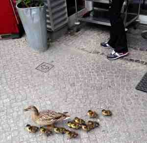 Ducks on Gro+ƒ Hamburge St_